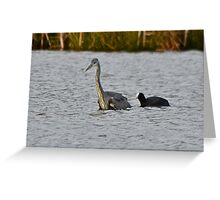 One man and his Coot Greeting Card
