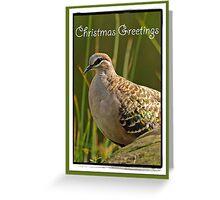 Christmas Greetings - Bronzewing Greeting Card