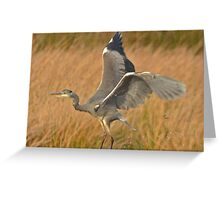 Heron 4 Greeting Card