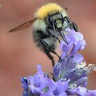 bee  by heather1990