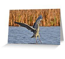 Heron 5 Greeting Card