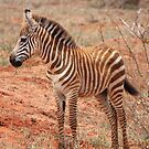 Stripey Infant by BlackhawkRogue
