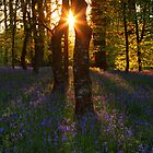 Bluebells at Sunset by garykingphoto