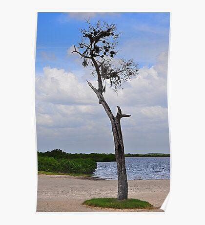 Tree on Coast Poster