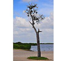 Tree on Coast Photographic Print