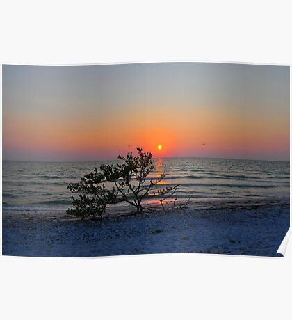 Sunset Over Small Tree on the Gulf of Mexico Poster