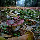 Red Russula ~ Russula sanguinea ~ by Charles & Patricia   Harkins ~ Picture Oregon