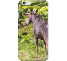 Bull Moose in Maine iPhone Case/Skin