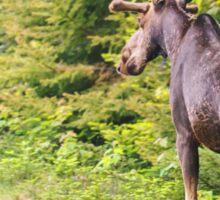 Bull Moose in Maine Sticker