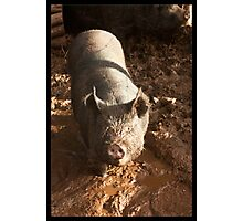 Like a Pig in S**t Photographic Print