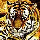 Sad Old Tiger by M-A-K