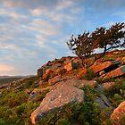 Yar Tor - Dartmoor National Park by garykingphoto