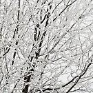 Winter's Paintbrush by nikongreg