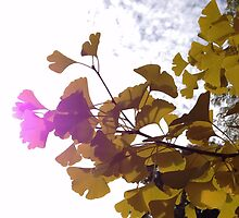 Sunny Autumn Ginkgo by ztrnorge