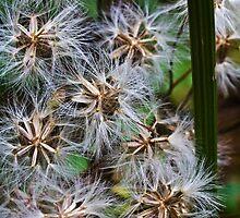 weed seeds by Vasil Popov