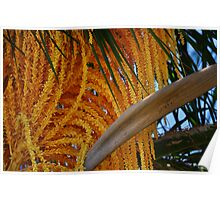 Palm Tree Seeds Poster