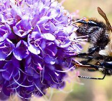 bumblebee by Vasil Popov