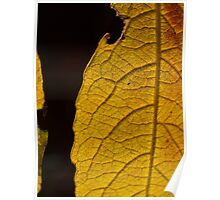 Leaf pattern 1 Poster