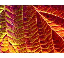 Leaf pattern 2 Photographic Print