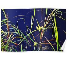 Grass on the Water  Poster
