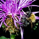 Bumblebee2 by Vasil Popov