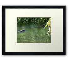 Otters in the tropical zone - Nutrias en la zona tropical Framed Print