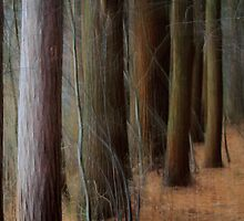 Pines by Lynn Wiles