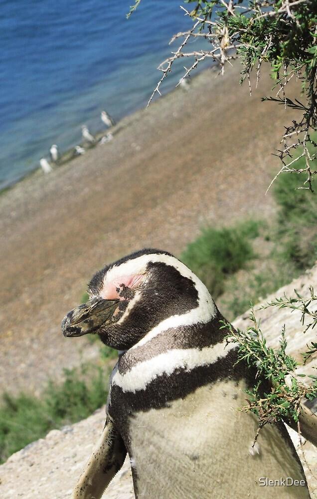 Puerto Madryn Penguin by SlenkDee