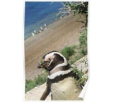 Puerto Madryn Penguin Poster