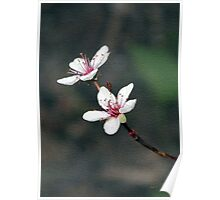 Purple Leaf Sand Cherry Book Cover Poster