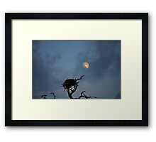 Bird Nest in the Moonlight  Framed Print