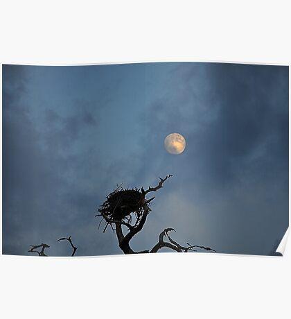 Bird Nest in the Moonlight  Poster