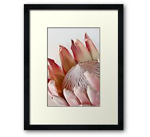 King Protea Framed Print