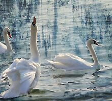Swan Lake  by NewfieKeith