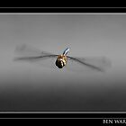 Flying dragonfly by Ben  Warren