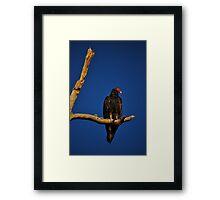 Vulture in Tree Framed Print
