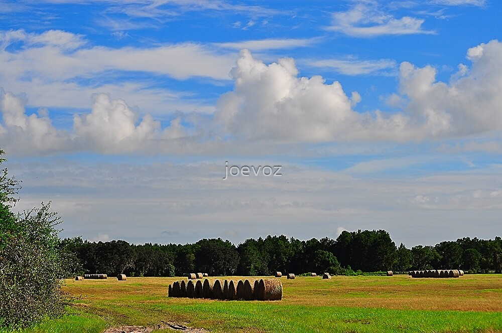 Hay Field  by joevoz