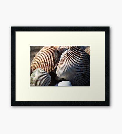 Shellfish Framed Print