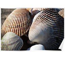 Shellfish Poster