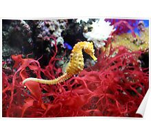 Yellow Seahorse Poster