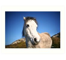 Horse on the Hill Art Print