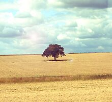 Lonely Tree by Claire Elford