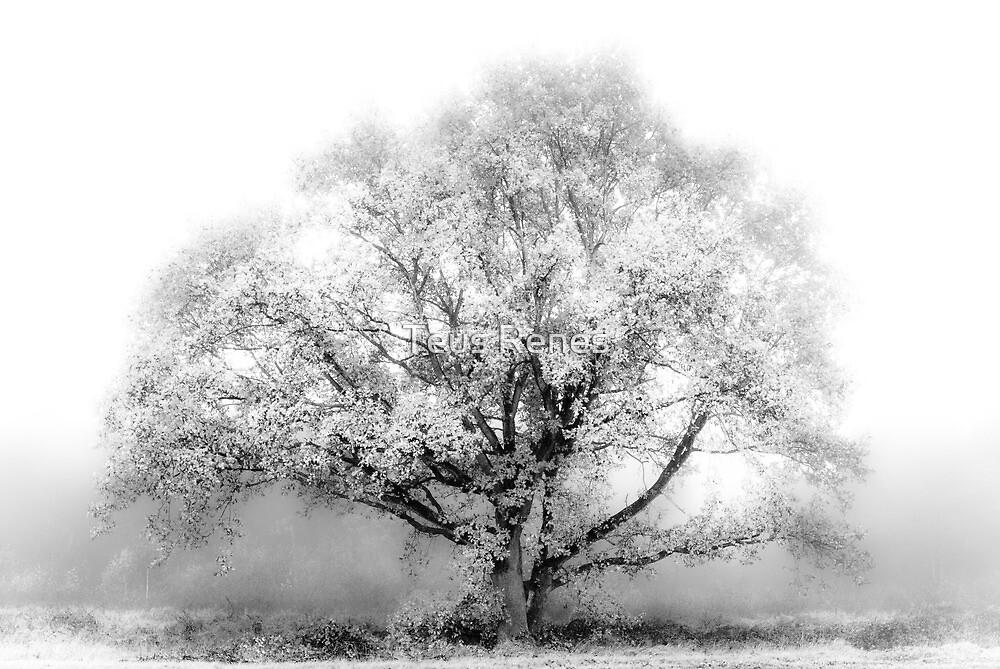 White Tree by Teus Renes