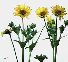 Wild Sunflowers by ninasilver