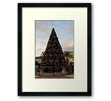 A Florida Tree Framed Print