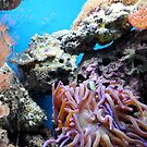 Underwater by Robin Black