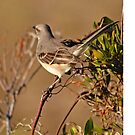 Mockingbird by Robin Lee