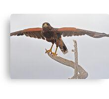 Yoga Hawk  Metal Print