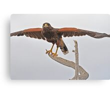 Yoga Hawk  Canvas Print