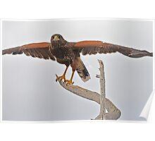Yoga Hawk  Poster
